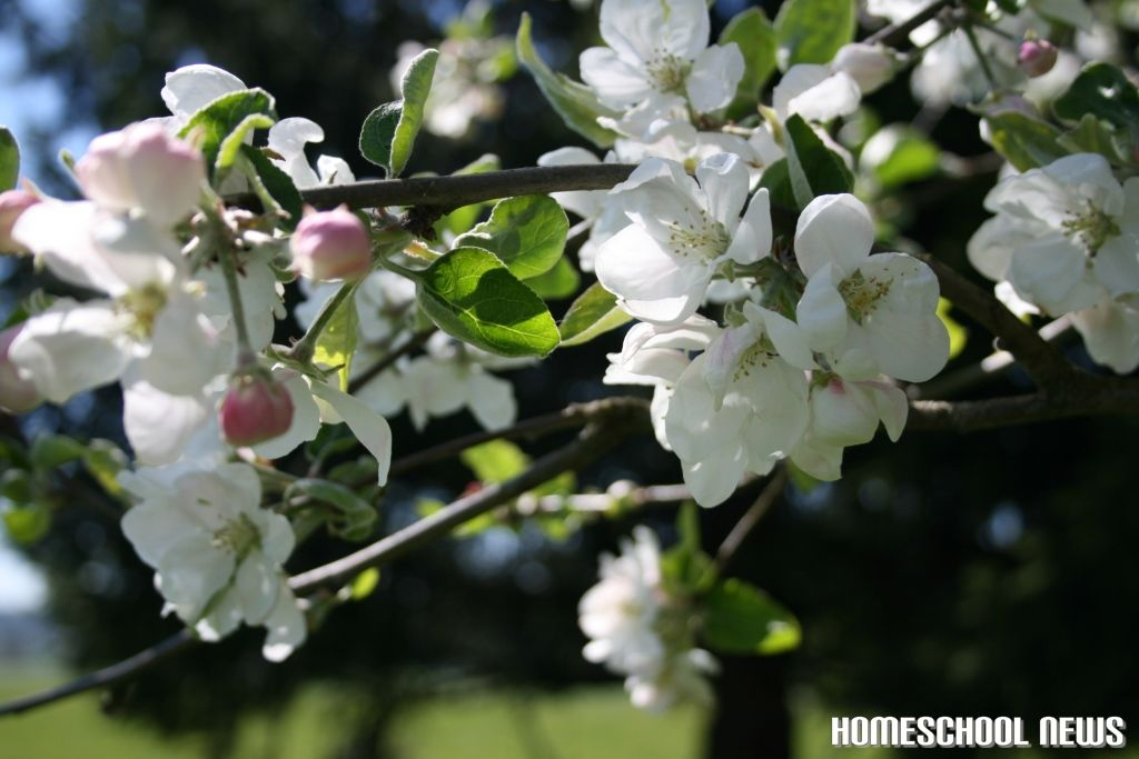 Frühling, Homeschool News, Jan und Bernice Zieba