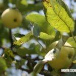 Äpfel im Juli, Homeschool News, Jan, Bernice, Zieba