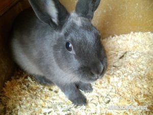 Babit the Rabbit, Homeschool News, Jan, Bernice, Zieba