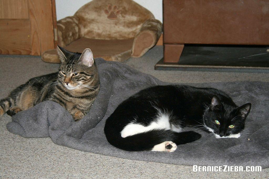 Haustier Katzen, Bernice Zieba, Homeschool News
