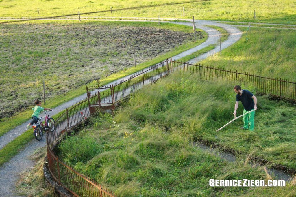 Gras mit der Sense schneiden