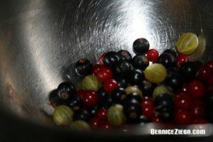 Rote und schwarze Johannisbeeren, Stachelbeeren