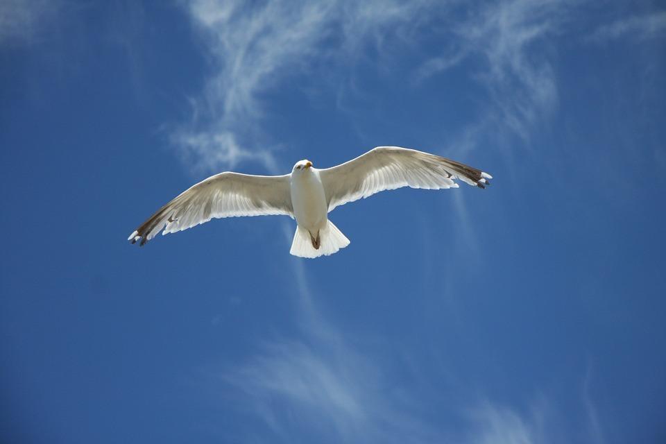 Möve, Seagull