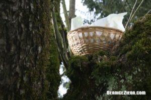 Osternest im Baum versteckt