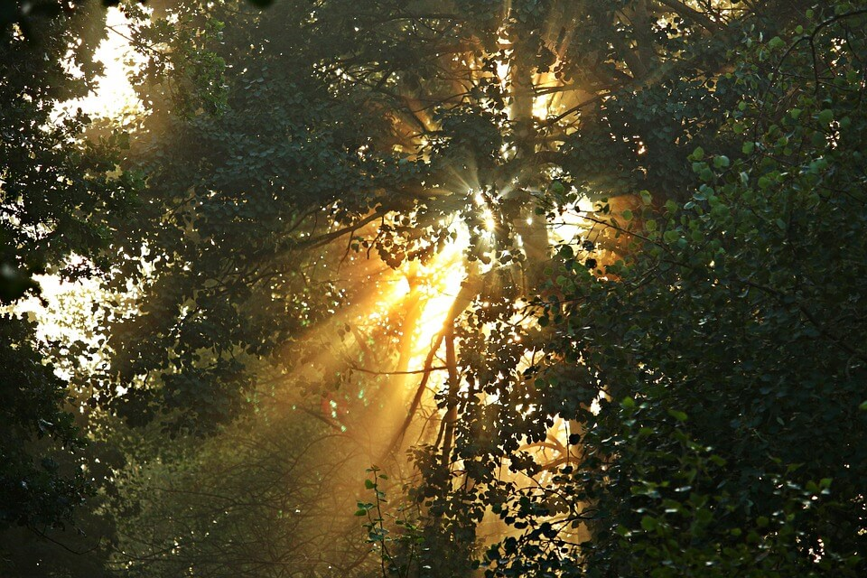 Tree and sunshine