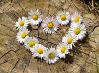 Daisy Heart, Bits of Thought, Bernice Zieba