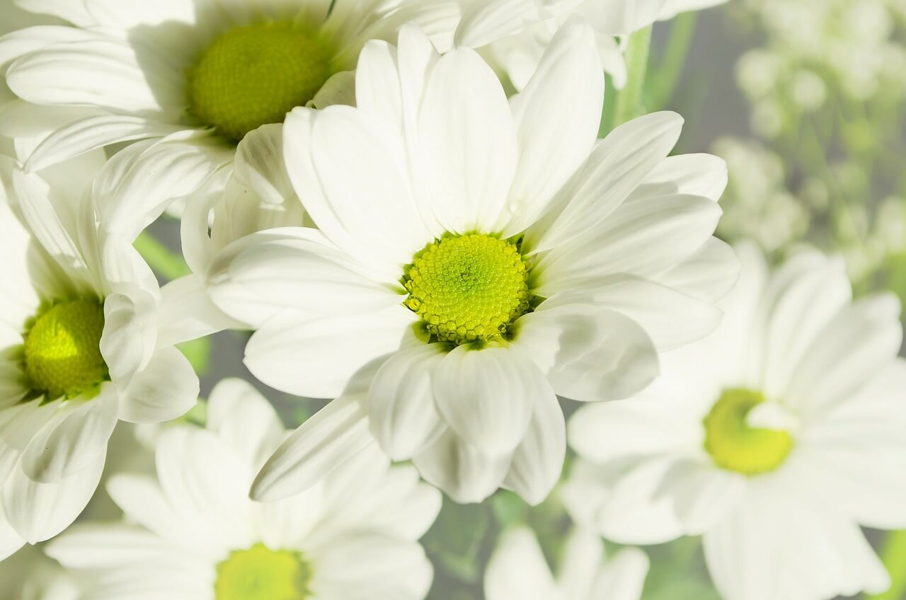 Flowers, Bernice Zieba