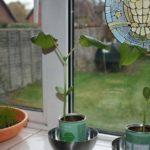 Pflanzen züchten, Growing Plants