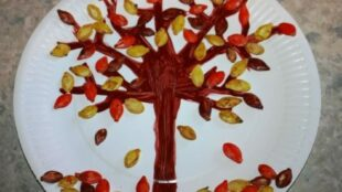 Kürbiskernenbaum, Pumpkin Seed Tree