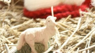 Cribfigure Lamb