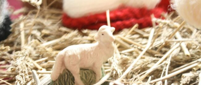 Cribfigure Lamb