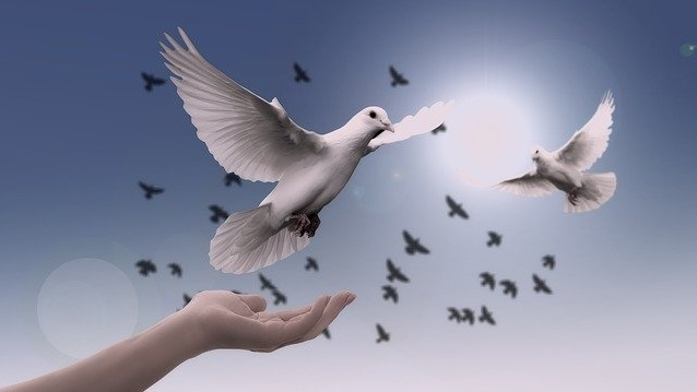 Doves-Cropped